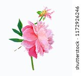a picturesque peony flower.... | Shutterstock .eps vector #1172926246