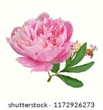 a picturesque peony flower.... | Shutterstock .eps vector #1172926273
