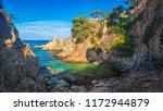 wild seascape of bay in...   Shutterstock . vector #1172944879