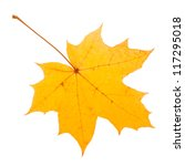 Yellow Maple Leaf As An Autumn...