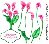 Watercolor Set Of Cala Lily...