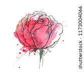 Stock vector flower red roses hand drawn illustration 1173004066
