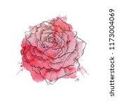 Stock vector flower red roses hand drawn illustration 1173004069