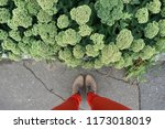 look down at the woman's legs... | Shutterstock . vector #1173018019