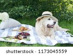picnic with dog  outdoor | Shutterstock . vector #1173045559
