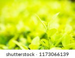 green leaf of nature view... | Shutterstock . vector #1173066139