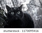 black cat on the tree in a city ... | Shutterstock . vector #1173095416