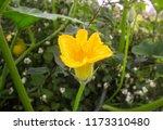 pumpkin with yellow flower... | Shutterstock . vector #1173310480