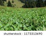high altitude environment  ... | Shutterstock . vector #1173313690