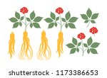ginseng plant. isolated ginseng ... | Shutterstock .eps vector #1173386653