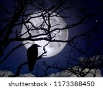 Raven On Branches In A Moonlit...