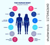 human body infographic elements ... | Shutterstock .eps vector #1173462640