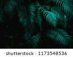 Tropical Palm Leaves In The...
