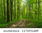 forest trees. nature green wood ... | Shutterstock . vector #1173551689