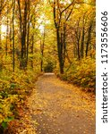 golden autumnal forest with... | Shutterstock . vector #1173556606