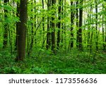 forest trees. nature green wood ... | Shutterstock . vector #1173556636
