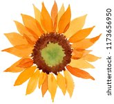 watercolor orange sunflower... | Shutterstock . vector #1173656950
