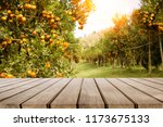 wooden table place  and orange... | Shutterstock . vector #1173675133