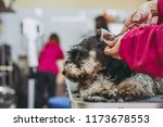 dog and trimmers | Shutterstock . vector #1173678553