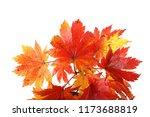 autumn maple leaves | Shutterstock . vector #1173688819