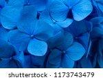 blue hydrangea background.... | Shutterstock . vector #1173743479
