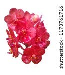 Red Orange Orchid Flowers White - Fine Art prints