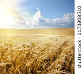 barley field under cloudy blue...   Shutterstock . vector #1173808510