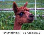 cut lama. lichtenstein | Shutterstock . vector #1173868519