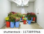 flowers in the big cold storage ... | Shutterstock . vector #1173895966