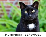 Stock photo a black cat with a white spot and striking yellow eyes 117399910