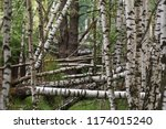 moscow region  russia. fallen... | Shutterstock . vector #1174015240