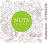 cashew  hazelnut  walnut ... | Shutterstock .eps vector #1174062226