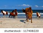 Wild Horses At Atlantic...