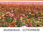 Field Of Flowers  Multicolor...