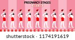 40 weeks of pregnancy stages... | Shutterstock .eps vector #1174191619