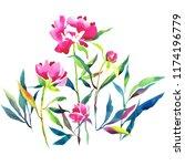 watercolor botanical... | Shutterstock . vector #1174196779