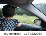 toddler girl child is watching... | Shutterstock . vector #1174232080