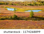 Autumn in the tundra. Yellow spruce branches in autumn colors on the moss background. Tundra, Kola peninsula, Russia.Beautiful landscape of forest-tundra, Scary face created by nature