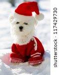 Christmas Puppy  Winter  ...