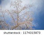winter city park.tree branches... | Shutterstock . vector #1174315873