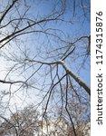 winter city park.tree branches... | Shutterstock . vector #1174315876