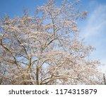 winter city park.tree branches... | Shutterstock . vector #1174315879