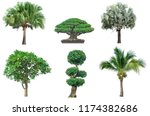 collection tree isolated on... | Shutterstock . vector #1174382686
