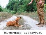 dog training process. english... | Shutterstock . vector #1174399360