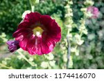 beautiful bright blooming... | Shutterstock . vector #1174416070