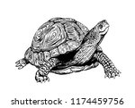 Stock vector graphical tortoise isolated on white background vector sketchy illustration 1174459756