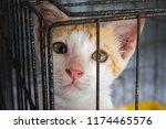 homeless animals. orphaned baby ... | Shutterstock . vector #1174465576