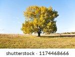 old oak tree in a field against ... | Shutterstock . vector #1174468666