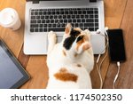 Stock photo cat playing on laptop computer or notebook with mobile phone or tablet and cup of coffee take home 1174502350