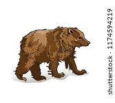 brown bear side view close up... | Shutterstock .eps vector #1174594219